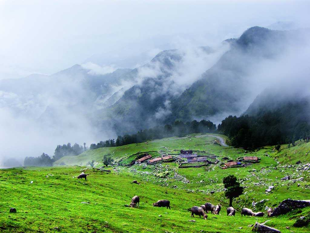 Greenery-at-its-best-In-Chopta-Valley-Lachen