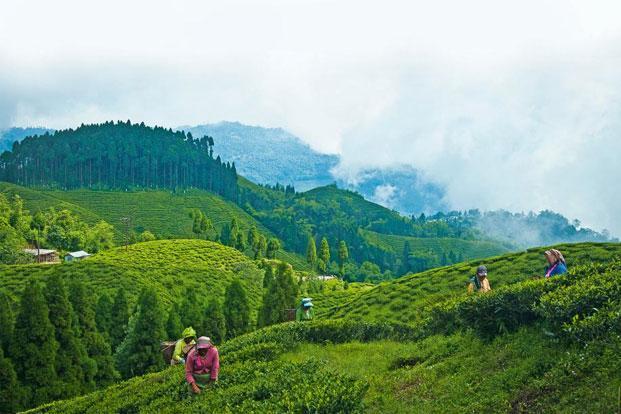 Bangalore-Darjeeling