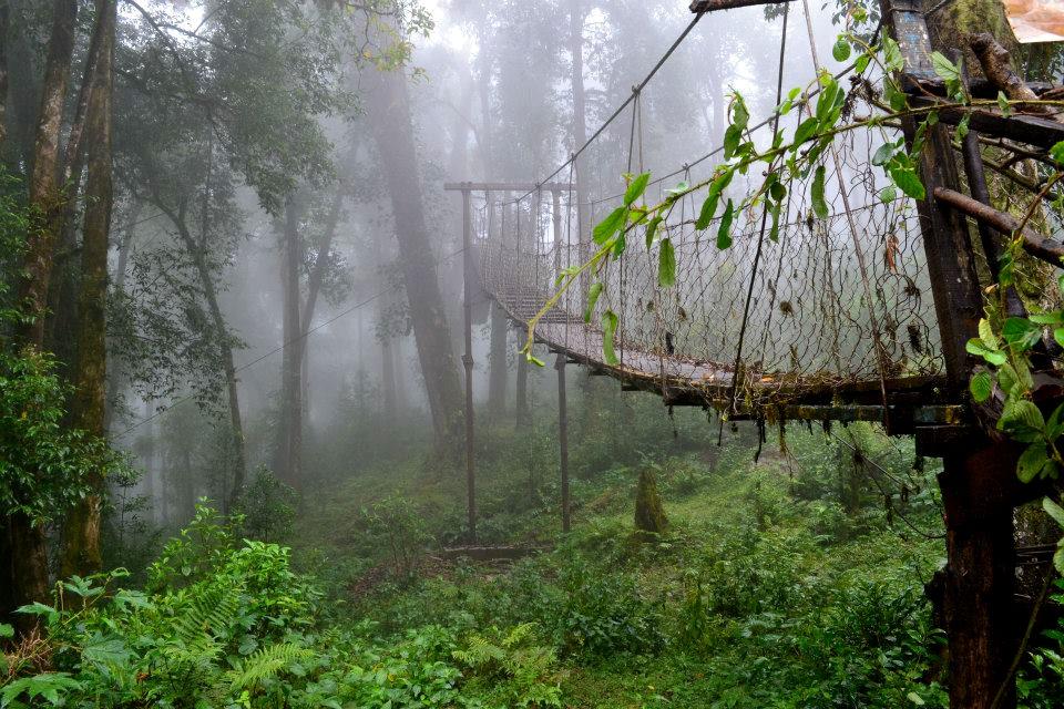 Canopy-Walk-in-Lolegaon-Lava-Lolegaon