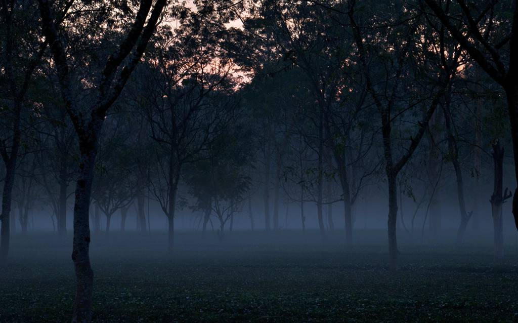 Chapramari-Wildlife-Sanctuary-Dooars-in-Foggy-Winter-Morning