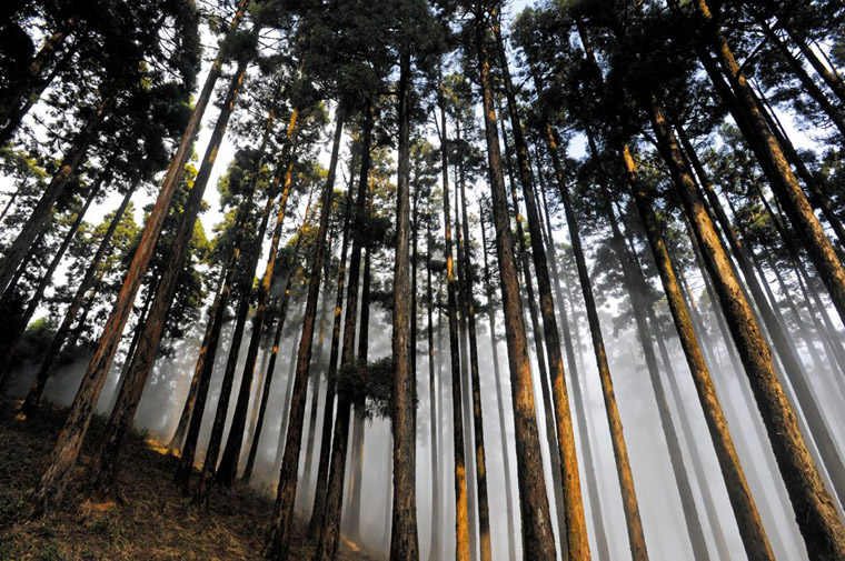 Dow-Hill-Forest-in-Kurseong