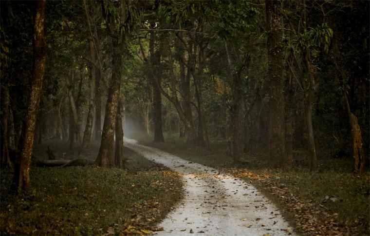 Gorumara-National-Park-Lataguri