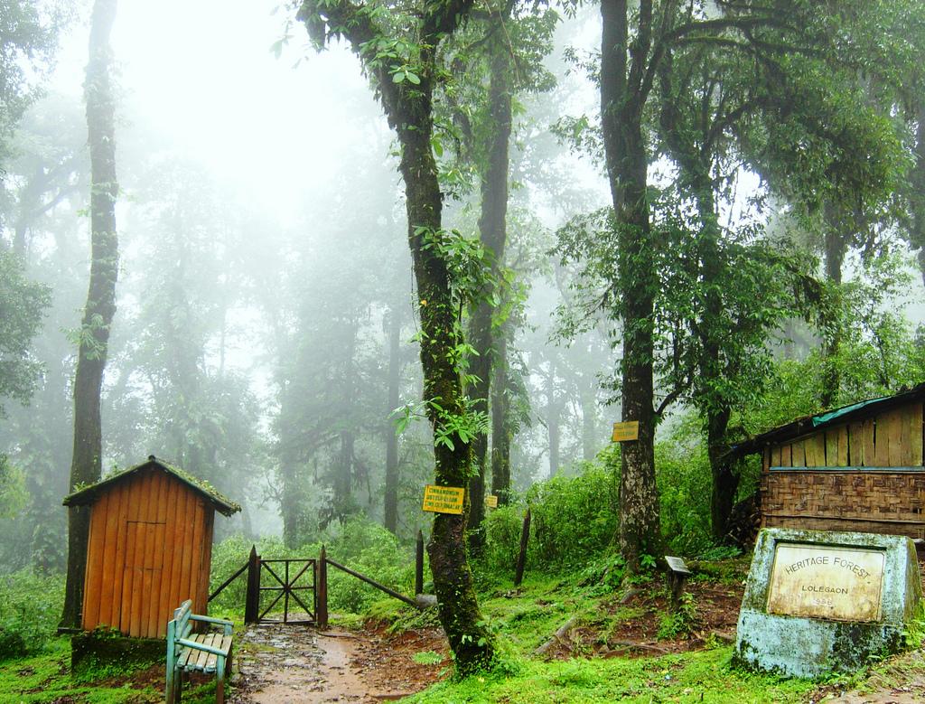 Heritage-Forest-Lolegaon-Lava-Lolegaon