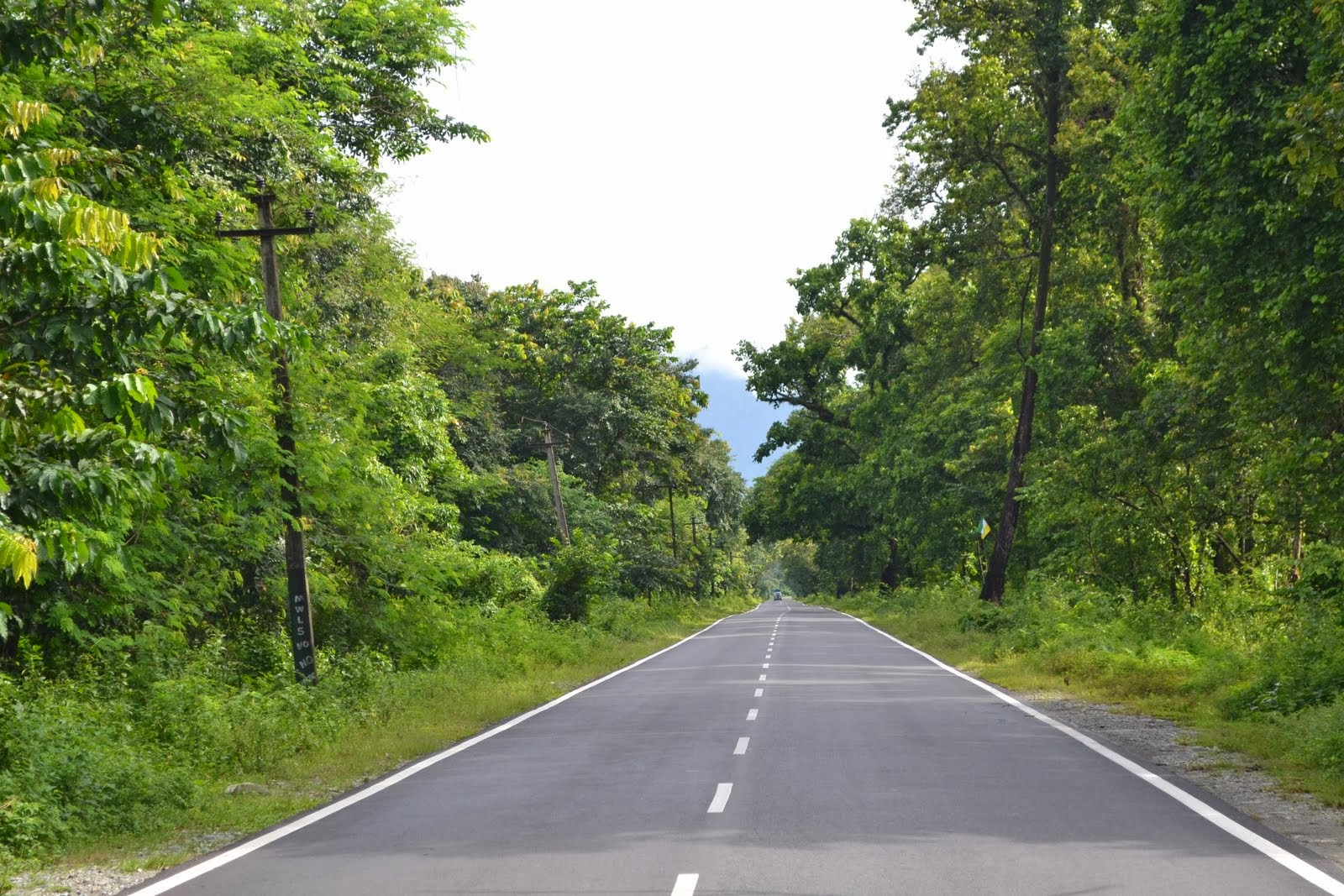 On-the-way-to-Gorumara-National-Park-Dooars