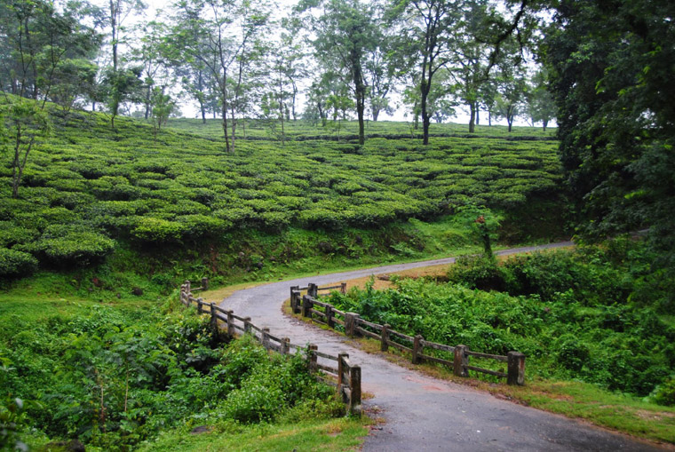 Samsing-Tea-Garden-Dooars