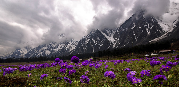 The-Valley-of-Flowers-Yumthang