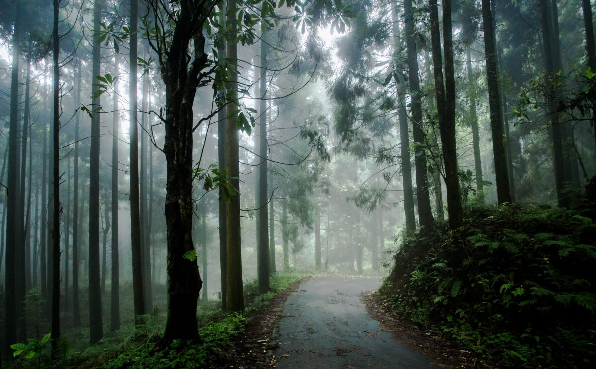 Way-to-Lolegaon-through-the-Misty-Pine-Trees-Lava-Lolegaon