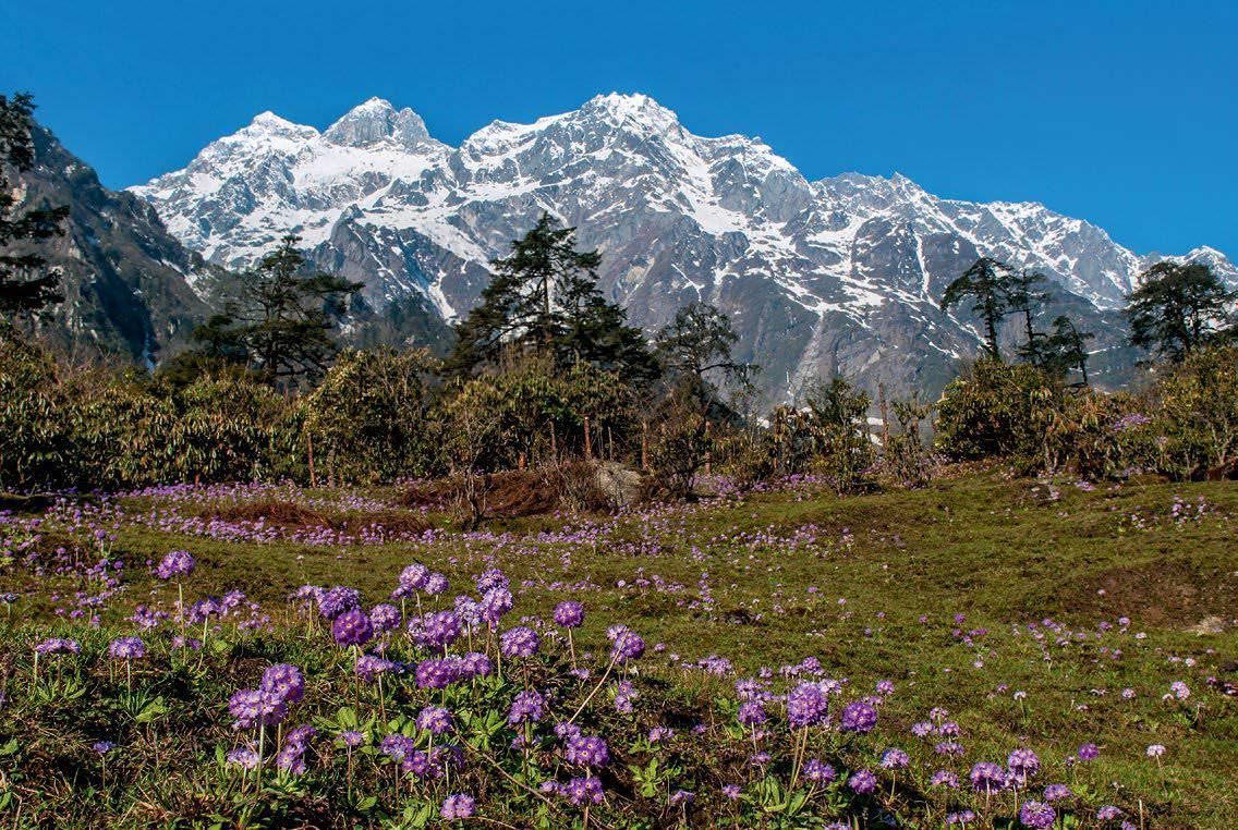 Yumthang-The-Valley-of-Flowers-North-Sikkim