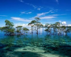 Top 20 Places To Visit In Andaman Trip; Andaman Travel Guide